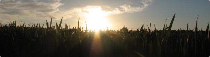 Where the grass is greener ... / Sigrid Sibul